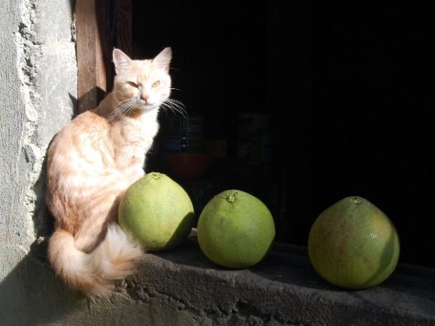 big new caledonian grapefruits