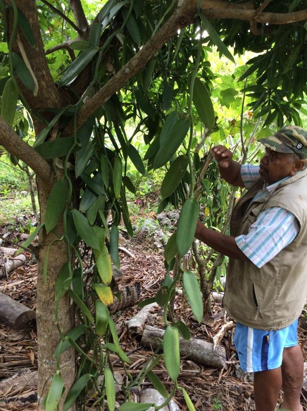 Michel a vanilla planter for organic cosmetics in Lifou