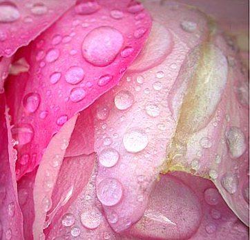 Damas rose hydrosol