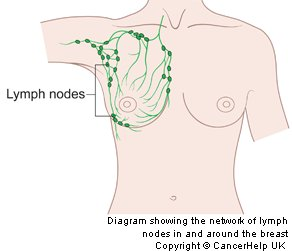 Lymph glands around Breasts