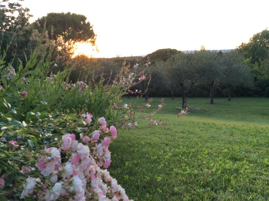 Grasse's roses essential oils
