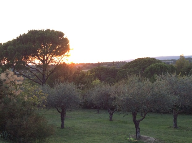 Olive trees landscape in south of France