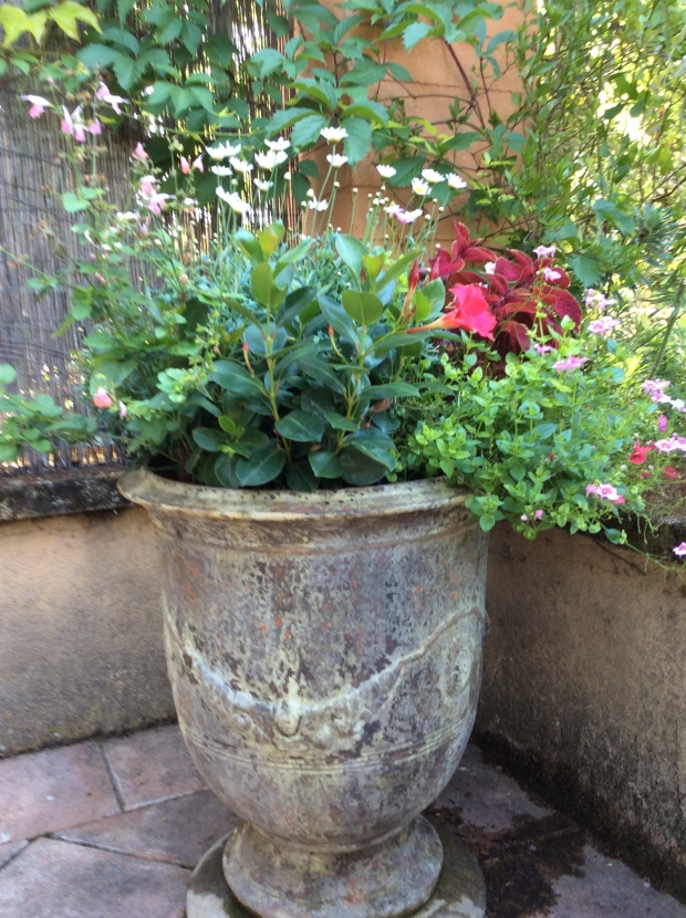 Camomile on a terrace antic jar