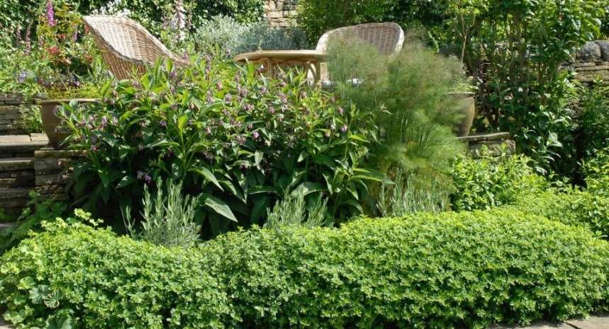 origano plants in a nice garden for essential oil