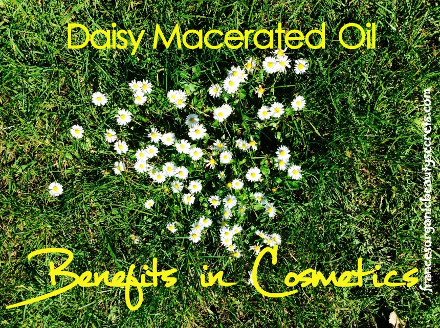 daisy macerated oil