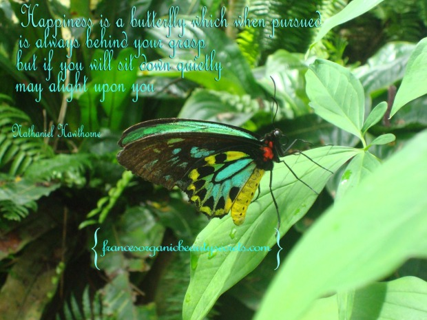 butterflies quote about happiness