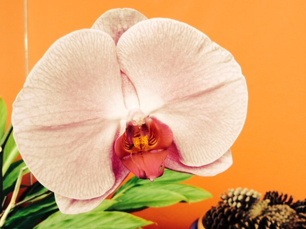 orchids in cosmetic