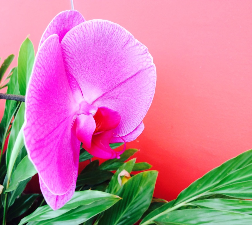 orchid extract in cosmetic
