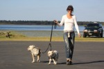 exercising, walking dogs