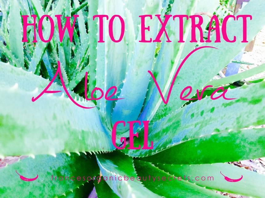 how to extract aloe vera gel