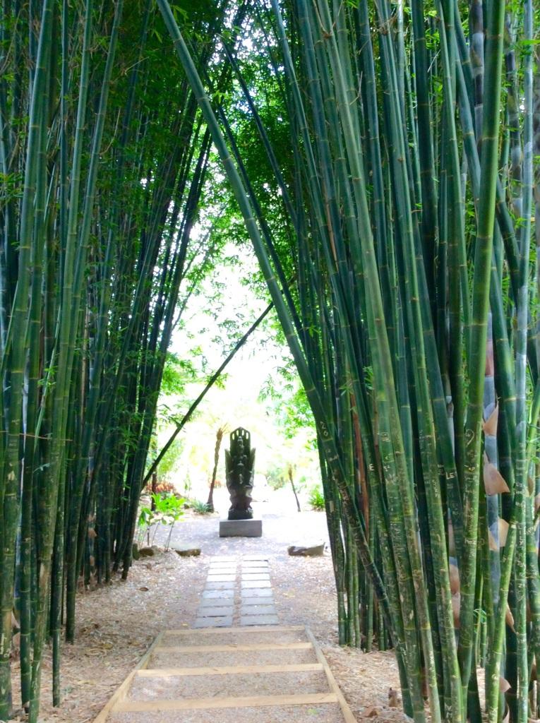 bamboo sap powder