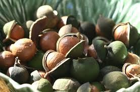 macadamia nuts from australia