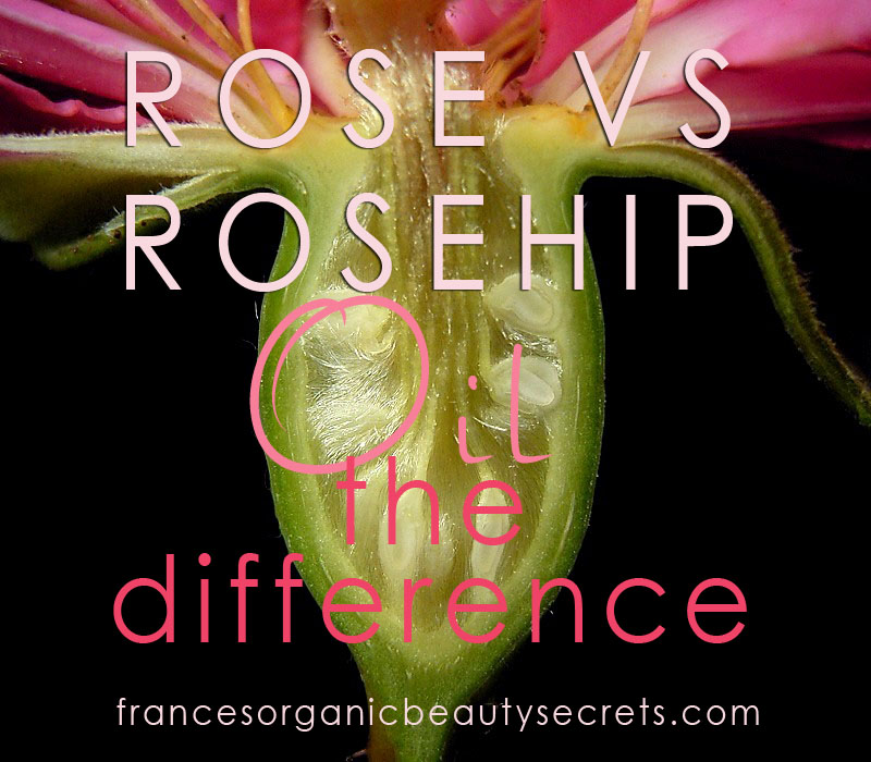 Rose versus rosehip the difference