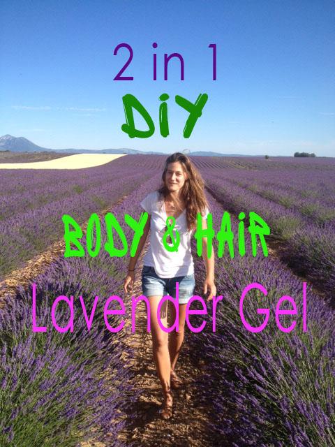 lavender harvesting for essential oil gel