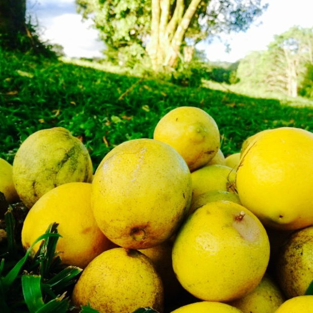 lemon-essence-in-aromatherapy