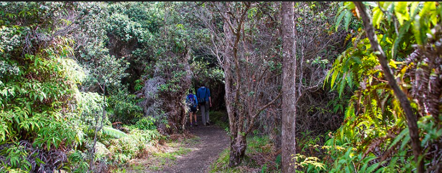 sandalwood forest.png